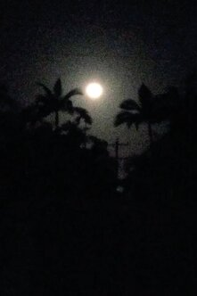 Moonrise_Palm_ Trees